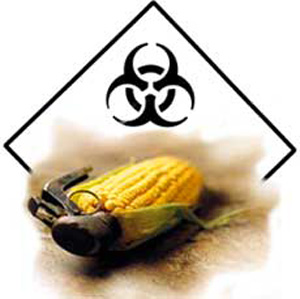 Monsanto: French Study Reports that GM Corn Causes Organ Damage In Rats