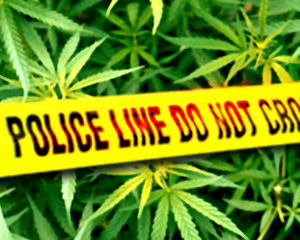 California: Aggressive Marijuana Busts in San Luis Obispo Prompt Protests