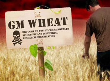 Monsanto to Pay $2.4 Million to Oregon Wheat Farmers for GMO Contamination