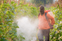 Illegal Herbicide Use on Monsanto GMOs Spurs Bitter Complaints